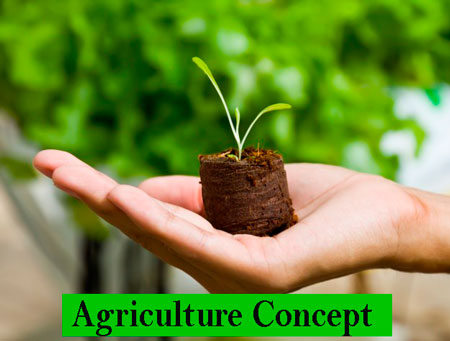 BSc Agriculture Course