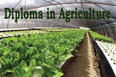 Diploma in Agriculture