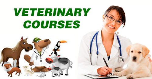Veterinary Courses Details